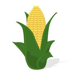 Corn icon organic product vector