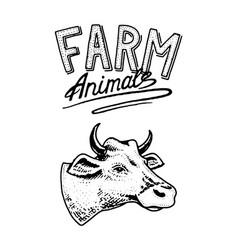 farm animal head a domestic cow taurus bull vector image