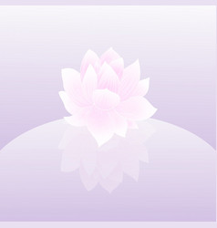 lily lotos pink flower vector image