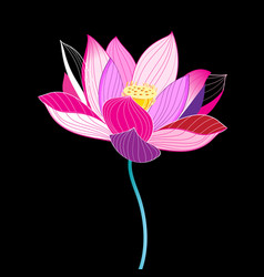 Magnificent of a beautiful lotus vector