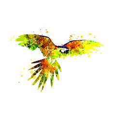 A flying parrot ara vector