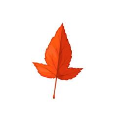 autumn leaf icon hawthorn tree forest foliage vector image