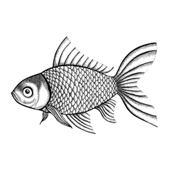 Fish painted in a graphic style points and lines vector