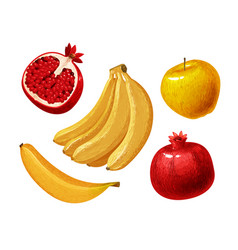Fruits such as banana apple pomegranate vector
