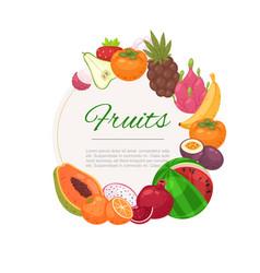 tropical fruits circle background cartoon vector image