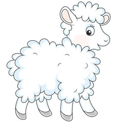 White curly sheep vector