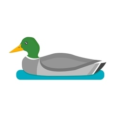 Drake duck vector image