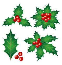 Holly leaves with berries vector