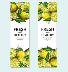 Lemon banner drawing citrus fruit frame vector