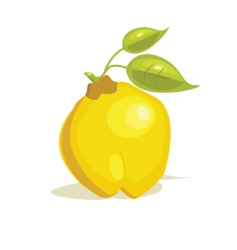 quince vector image