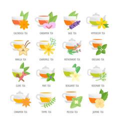Set flat icons herbal tea vector