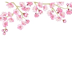 Card with cherry blossom vector image