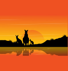 at sunset kangaroo scenery silhouettes vector image vector image