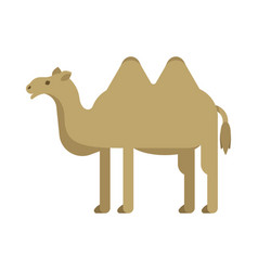 flat style of camel vector image