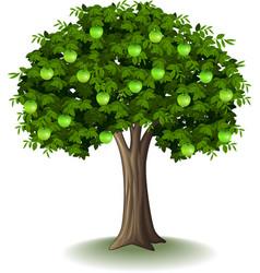 green apple on apple tree vector image