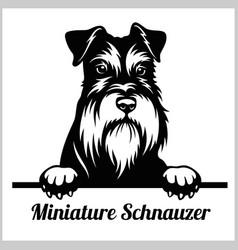 Miniature schnauzer - peeking dogs - breed face vector