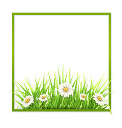 green frame with grass and daisies vector image