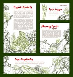 vegetable banner with veggies bean mushroom vector image
