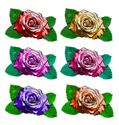 beautiful set of different roses hand-drawn vector image