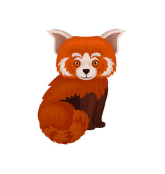 chinese red panda cute fluffy wild animal vector image