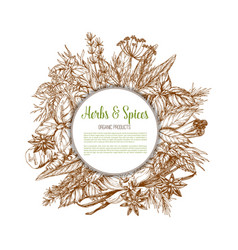 Herbs and spices sketch poster vector