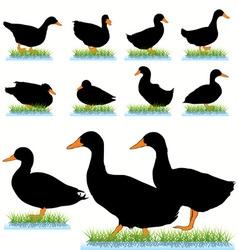 ducks set vector image vector image