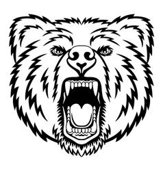 Growling bear vector image vector image