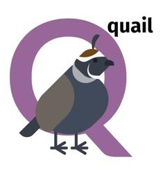 English animals zoo alphabet letter Q vector image