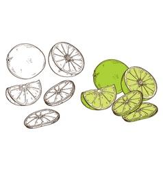 Lemon vegetable acidulous tart acid taste vector