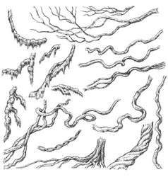 liana branches sketch vector image vector image