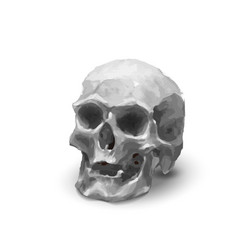 ancient realistic human skull in black and white vector image