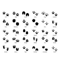 Animal footprints walking track animals paw vector