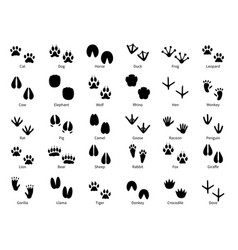 animal footprints walking track animals paw with vector image