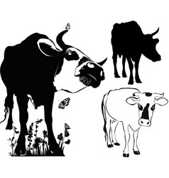 cow collection isolated on white background vector image