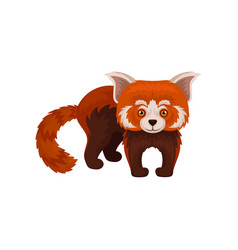 cute chinese red panda wild animal vector image