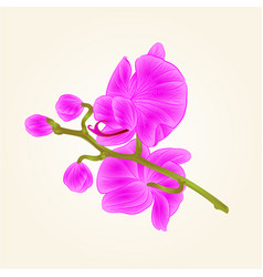 Beautiful orchid purple stem with flowers and vector