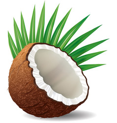 Coconut with leaves isolated on white vector
