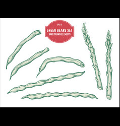 collection hand drawn pastel green beans vector image