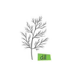 dill hand drawn vector image