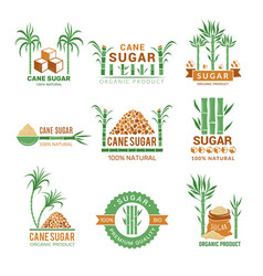 sugarcane manufacturing sweets plants production vector image