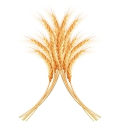 Wheat ears with space for text EPS 10 vector image