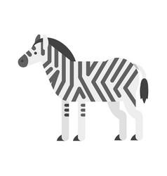 flat style of zebra vector image