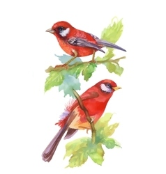 Watercolor red Birds on branches with green leaves vector image