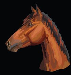 Colorful horse portrait-6 vector