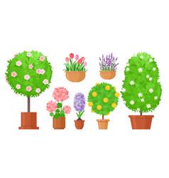 garden flowers in pots flat vector image