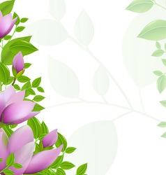 Magnolia Background vector image
