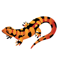orange spotted salamander isolated on a white vector image