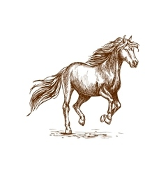Running and prancing horse sketch portrait vector