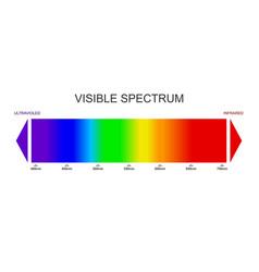 Spectrum visible light diagram portion the vector