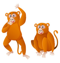 Two monkeys with brown fur vector